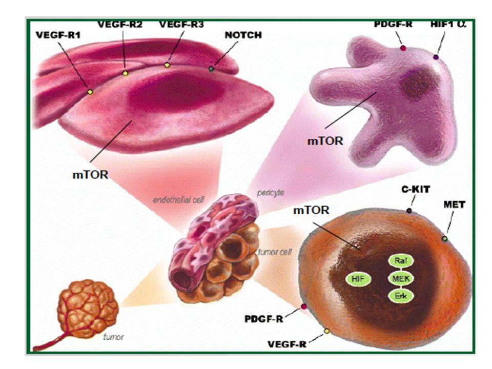 Motzer RJ, et al.N Engl J Med 1996;335:865–75 Linehan WM, et al.