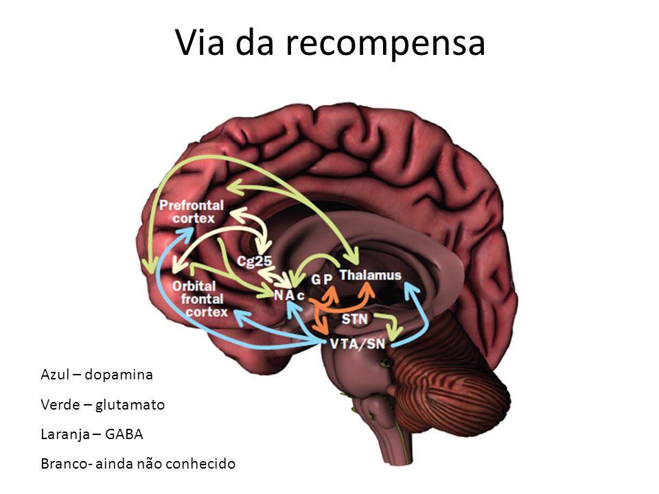 Azul – dopamina Verde – glutamato Laranja – GABA Branco- ainda não conhecido