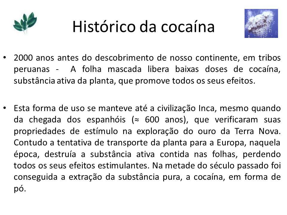 Histórico da cocaína 2000 anos antes do descobrimento de nosso continente, em tribos peruanas - A folha mascada libera baixas doses de cocaína, substâ