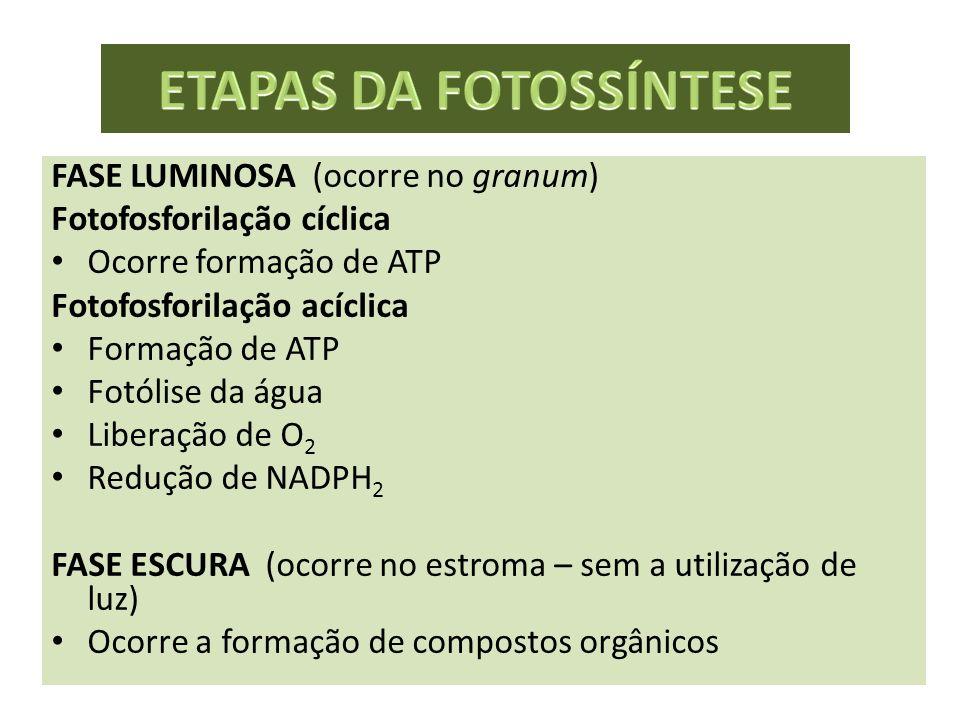 FASE LUMINOSA (ocorre no granum) Fotofosforilação cíclica Ocorre formação de ATP Fotofosforilação acíclica Formação de ATP Fotólise da água Liberação