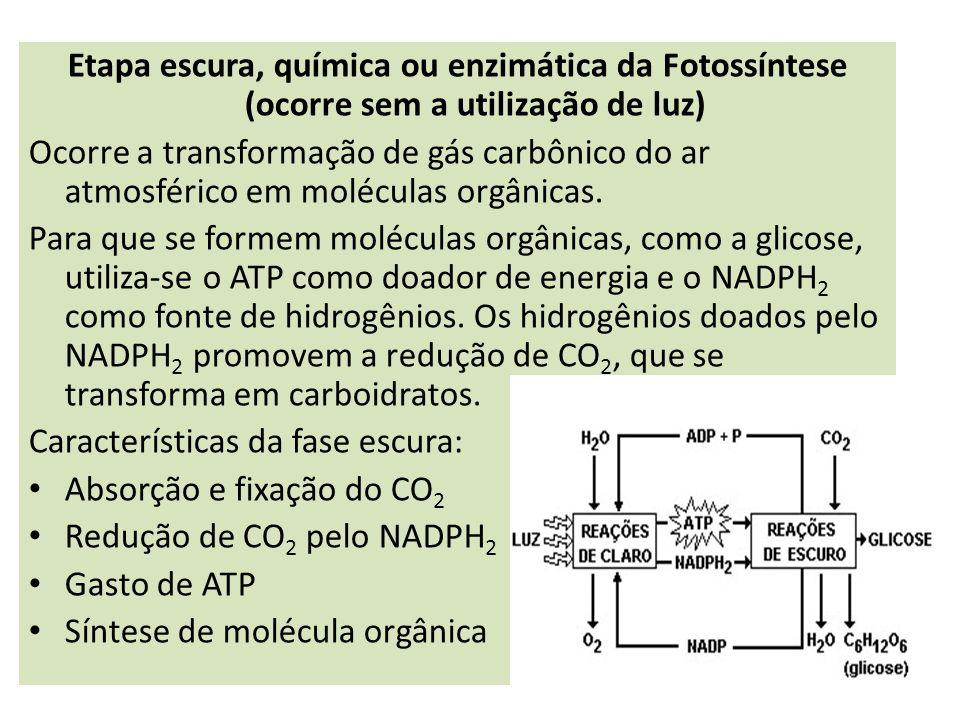 Etapa escura, química ou enzimática da Fotossíntese (ocorre sem a utilização de luz) Ocorre a transformação de gás carbônico do ar atmosférico em molé