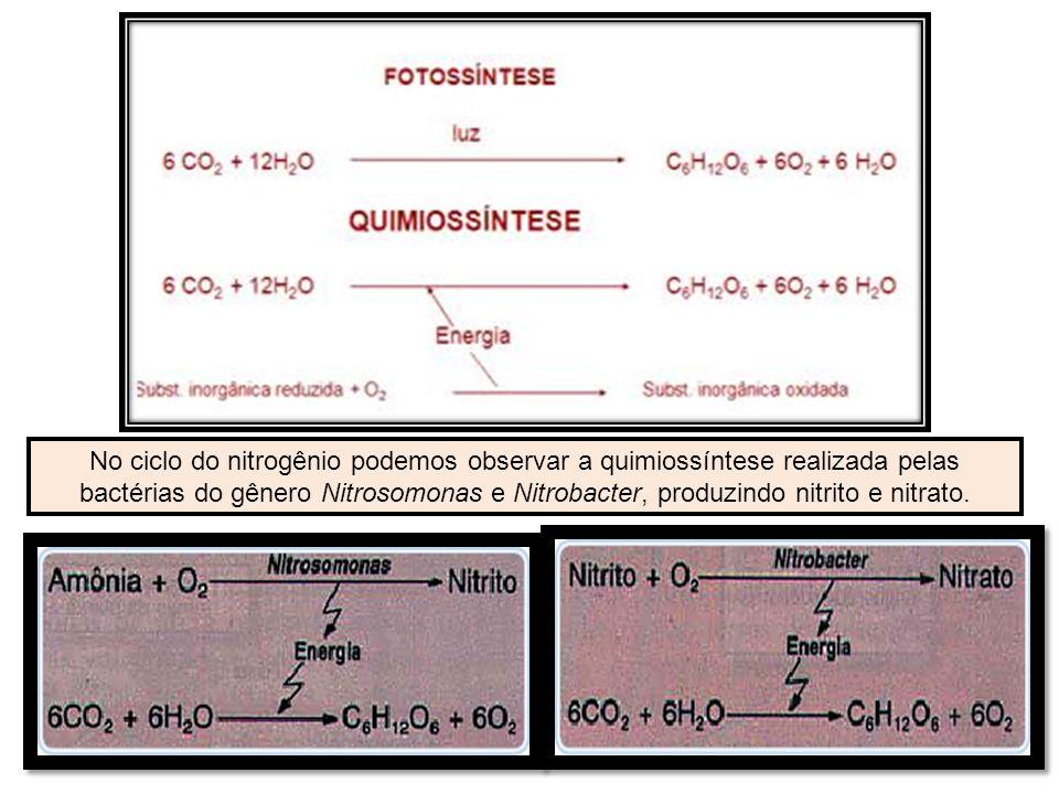 No ciclo do nitrogênio podemos observar a quimiossíntese realizada pelas bactérias do gênero Nitrosomonas e Nitrobacter, produzindo nitrito e nitrato.