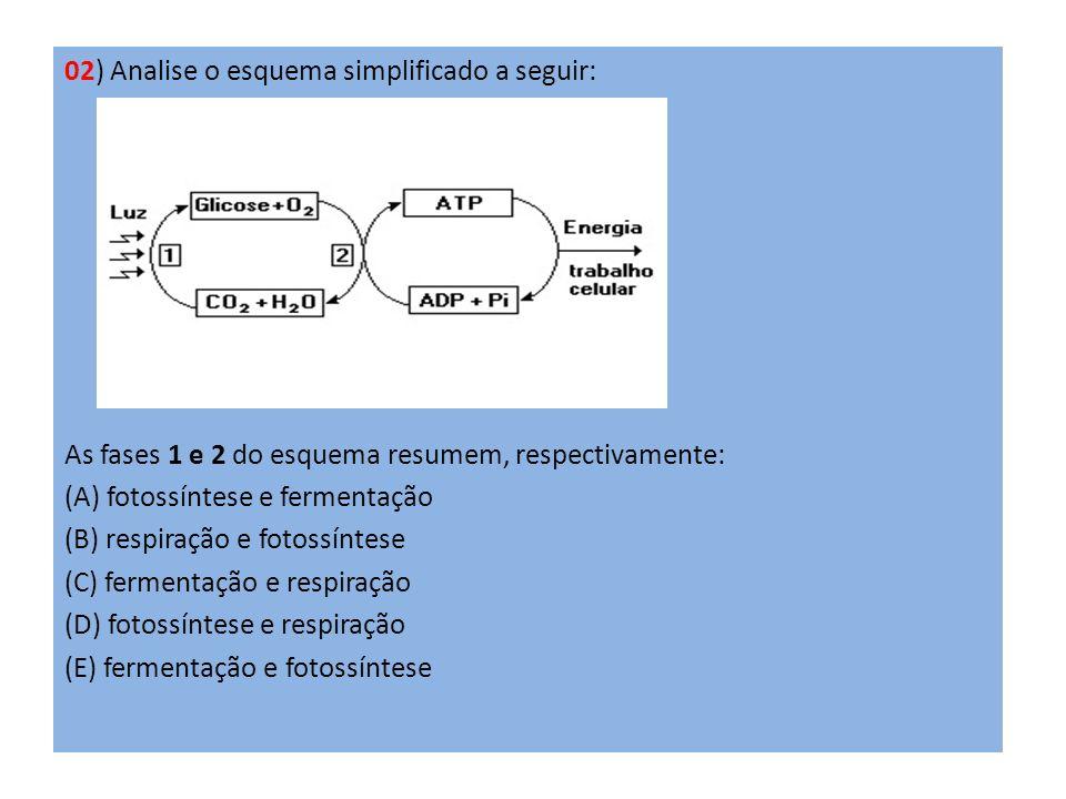 02) Analise o esquema simplificado a seguir: As fases 1 e 2 do esquema resumem, respectivamente: (A) fotossíntese e fermentação (B) respiração e fotos