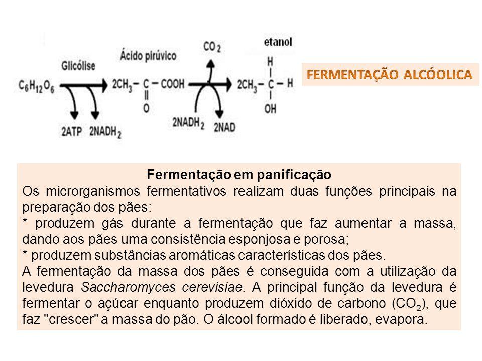 Fermentação em panificação Os microrganismos fermentativos realizam duas funções principais na preparação dos pães: * produzem gás durante a fermentaç