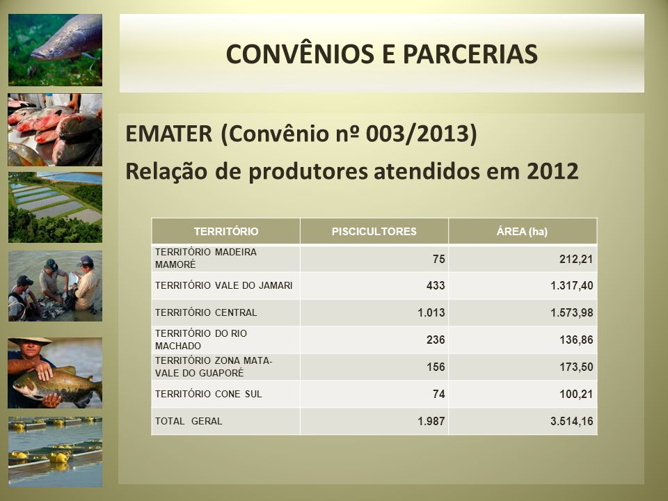 EMATER (Convênio nº 003/2013) Relação de produtores atendidos em 2012 TERRITÓRIOPISCICULTORESÁREA (ha) TERRITÓRIO MADEIRA MAMORÉ 75 212,21 TERRITÓRIO VALE DO JAMARI 433 1.317,40 TERRITÓRIO CENTRAL 1.013 1.573,98 TERRITÓRIO DO RIO MACHADO 236 136,86 TERRITÓRIO ZONA MATA- VALE DO GUAPORÉ 156 173,50 TERRITÓRIO CONE SUL 74 100,21 TOTAL GERAL 1.987 3.514,16 CONVÊNIOS E PARCERIAS