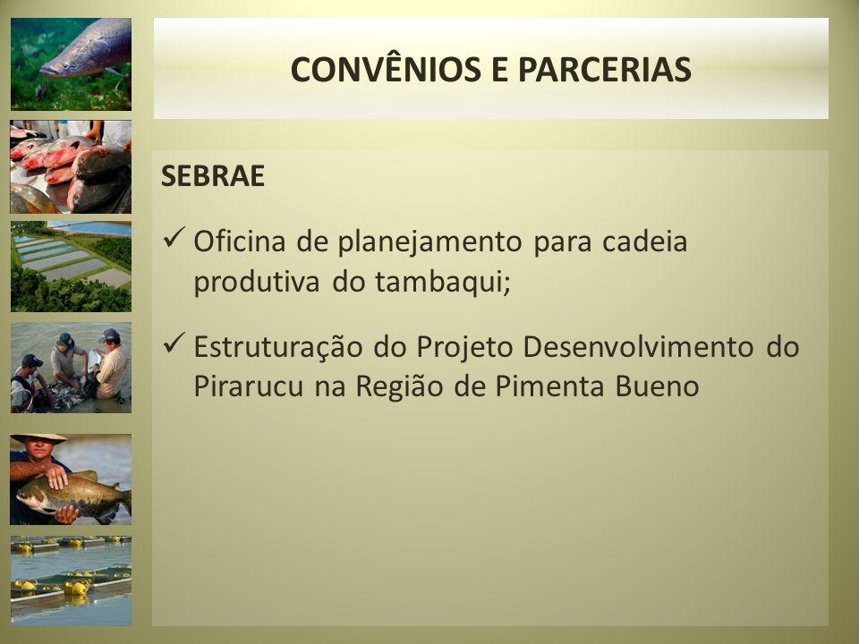 SEBRAE Oficina de planejamento para cadeia produtiva do tambaqui; Estruturação do Projeto Desenvolvimento do Pirarucu na Região de Pimenta Bueno CONVÊNIOS E PARCERIAS