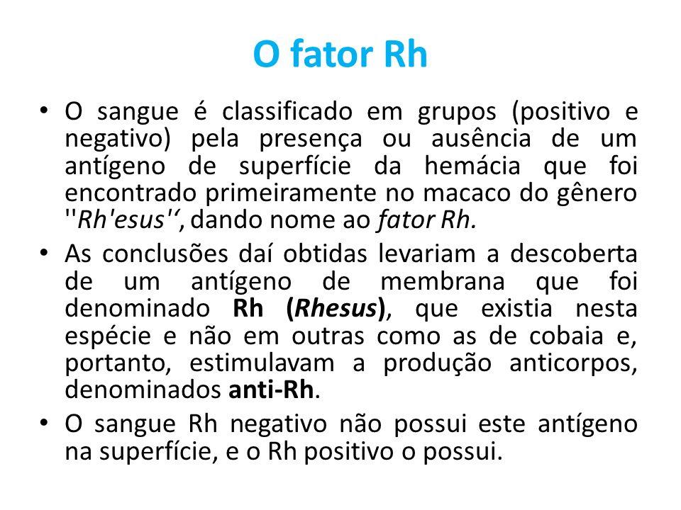 O fator Rh O sangue é classificado em grupos (positivo e negativo) pela presença ou ausência de um antígeno de superfície da hemácia que foi encontrado primeiramente no macaco do gênero Rh esus , dando nome ao fator Rh.