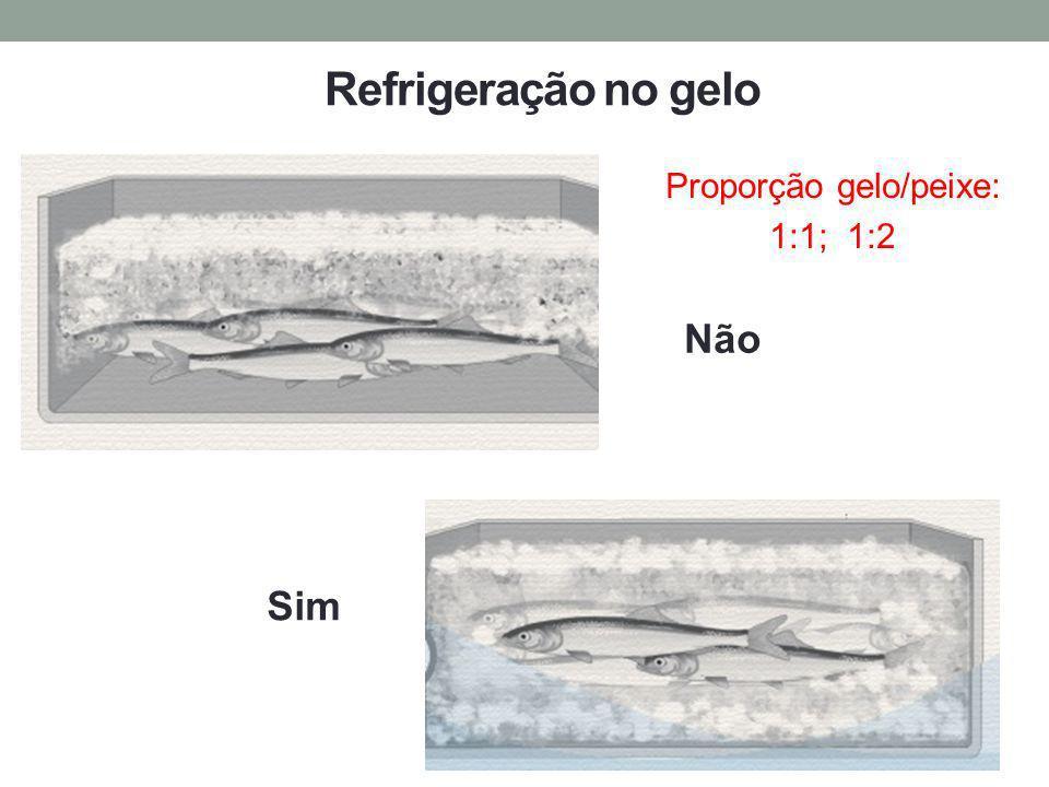 Não Sim Proporção gelo/peixe: 1:1; 1:2