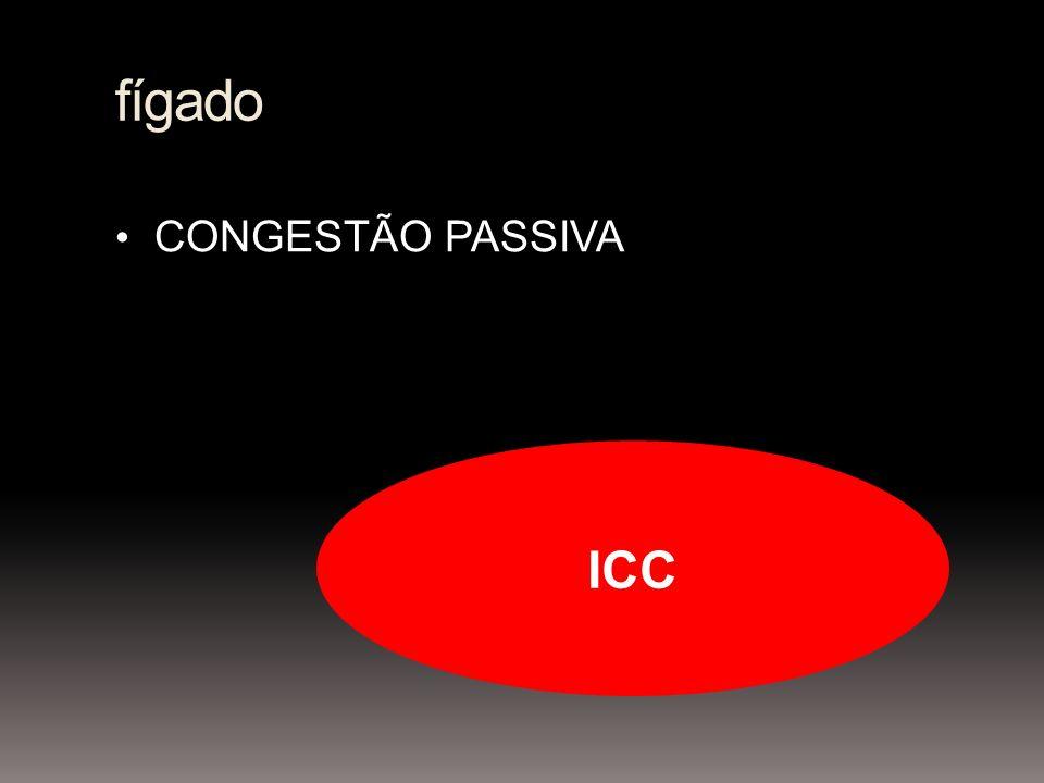 fígado CONGESTÃO PASSIVA ICC
