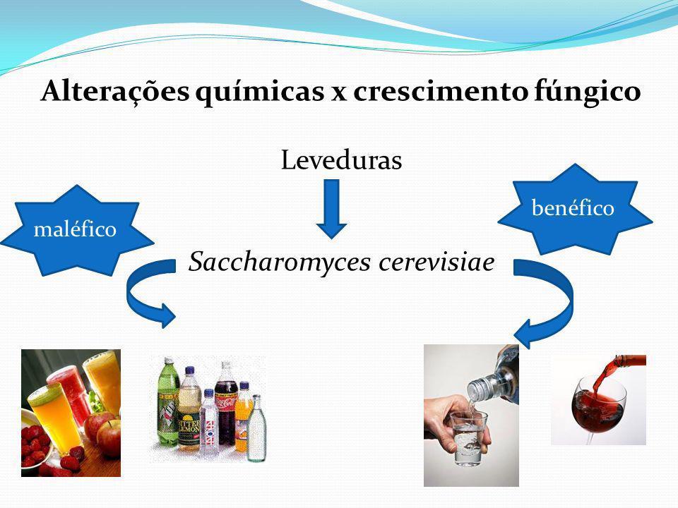Alterações químicas x crescimento fúngico Leveduras Saccharomyces cerevisiae maléfico benéfico