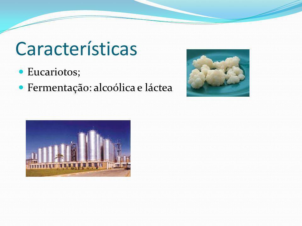 Características Eucariotos; Fermentação: alcoólica e láctea