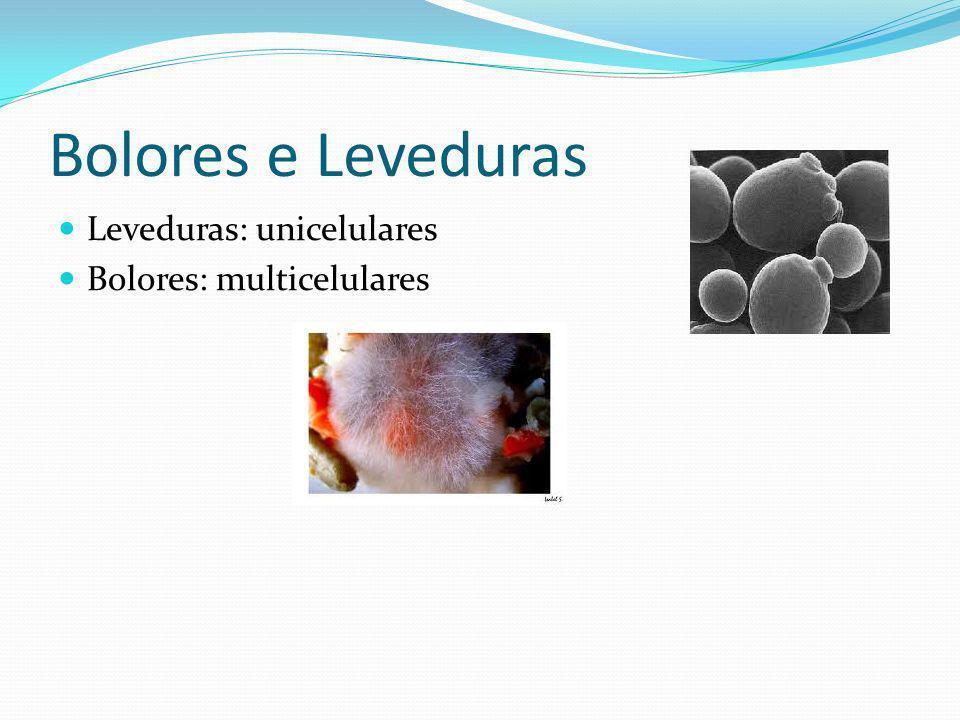 Bolores e Leveduras Leveduras: unicelulares Bolores: multicelulares