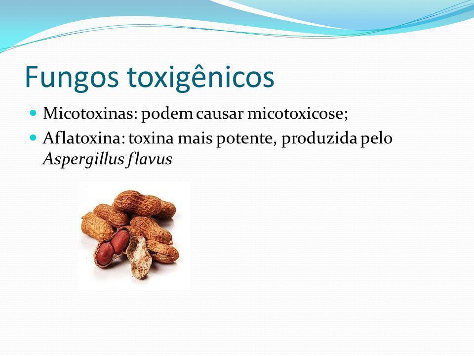 Fungos toxigênicos Micotoxinas: podem causar micotoxicose; Aflatoxina: toxina mais potente, produzida pelo Aspergillus flavus
