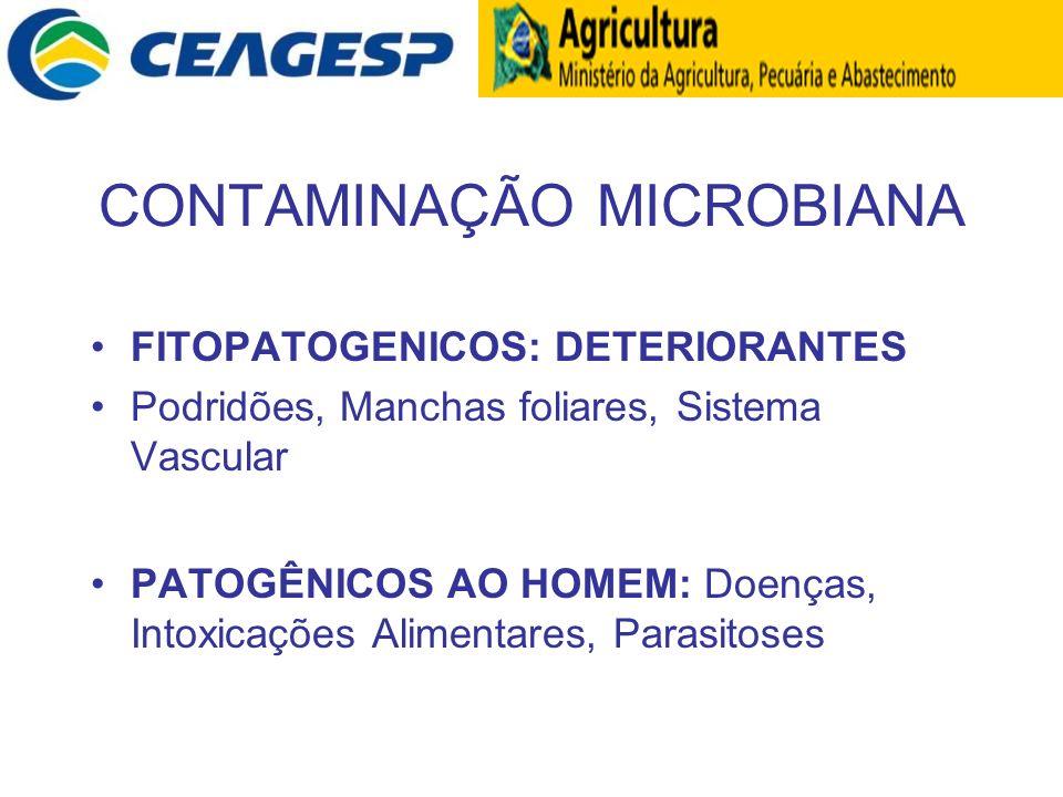 CONTAMINAÇÃO MICROBIANA FITOPATOGENICOS: DETERIORANTES Podridões, Manchas foliares, Sistema Vascular PATOGÊNICOS AO HOMEM: Doenças, Intoxicações Alime
