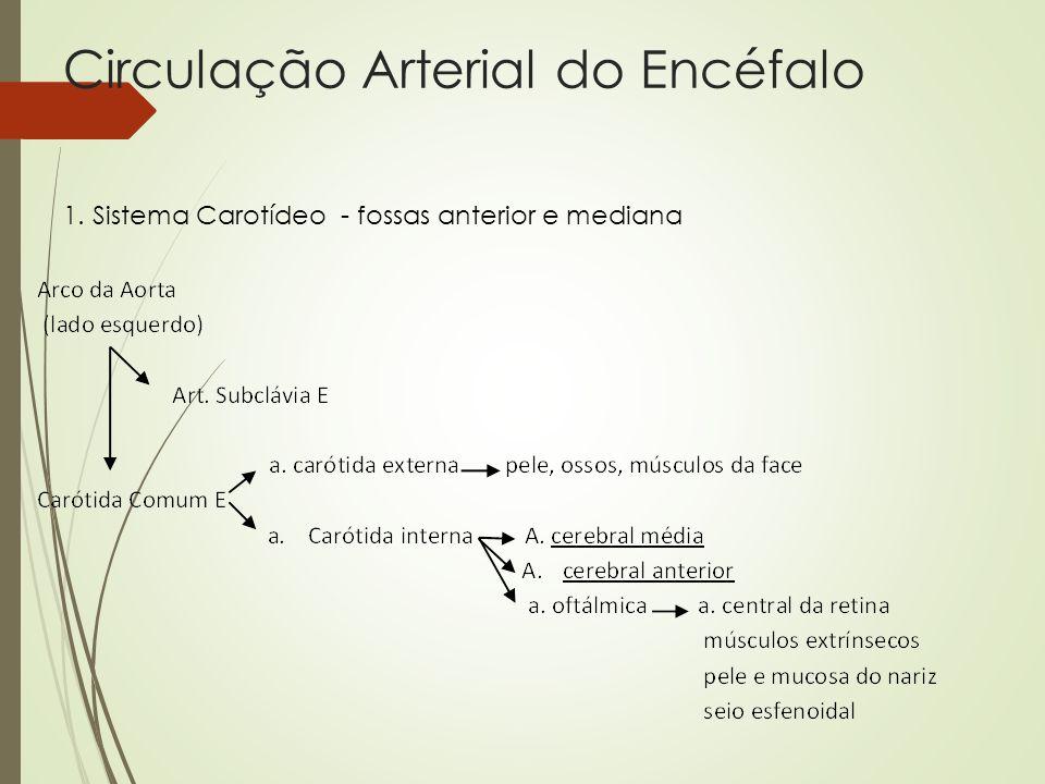 Circulação Arterial do Encéfalo 1. Sistema Carotídeo - fossas anterior e mediana