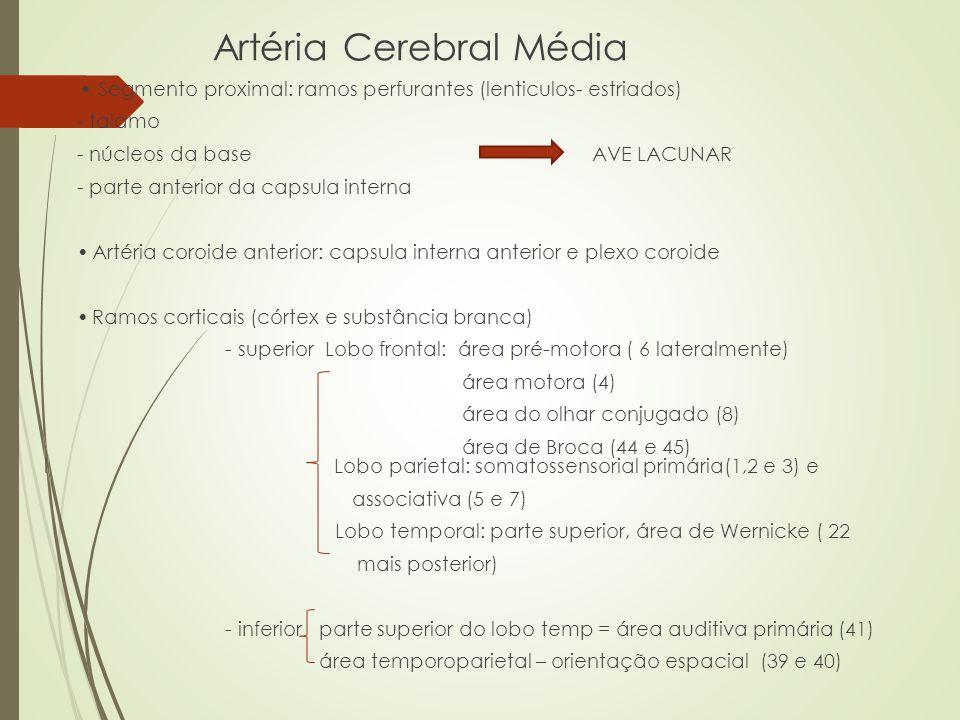 Artéria Cerebral Média Segmento proximal: ramos perfurantes (lenticulos- estriados) - talamo - núcleos da base AVE LACUNAR - parte anterior da capsula