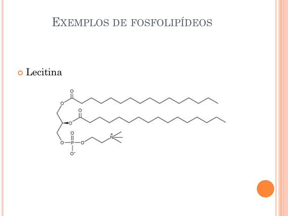E XEMPLOS DE FOSFOLIPÍDEOS Lecitina
