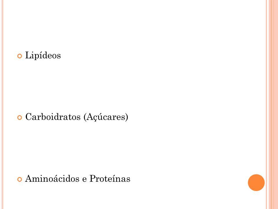 Lipídeos Carboidratos (Açúcares) Aminoácidos e Proteínas
