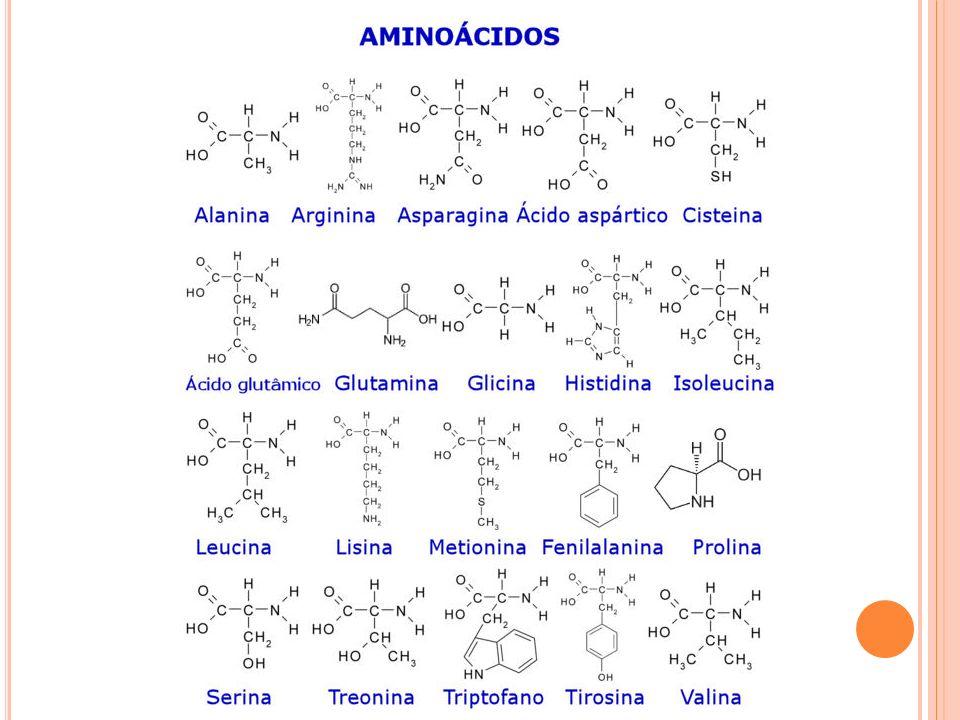 Desses 20, 19 apresentam moléculas quirais. Apenas a glicina não apresenta atividade óptica.