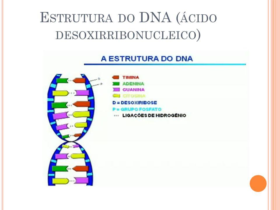 E STRUTURA DO DNA ( ÁCIDO DESOXIRRIBONUCLEICO )