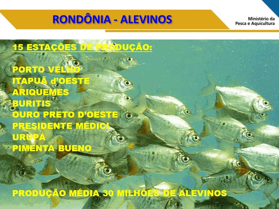 RONDÔNIA - ALEVINOS 15 ESTAÇÕES DE PRODUÇÃO: PORTO VELHO ITAPUÃ dOESTE ARIQUEMES BURITIS OURO PRETO DOESTE PRESIDENTE MÉDICI URUPÁ PIMENTA BUENO PRODUÇÃO MÉDIA 30 MILHÕES DE ALEVINOS