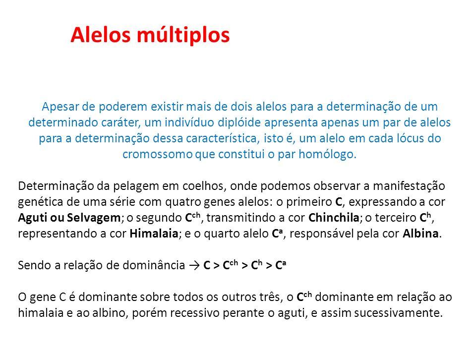 Alelos múltiplos Apesar de poderem existir mais de dois alelos para a determinação de um determinado caráter, um indivíduo diplóide apresenta apenas u