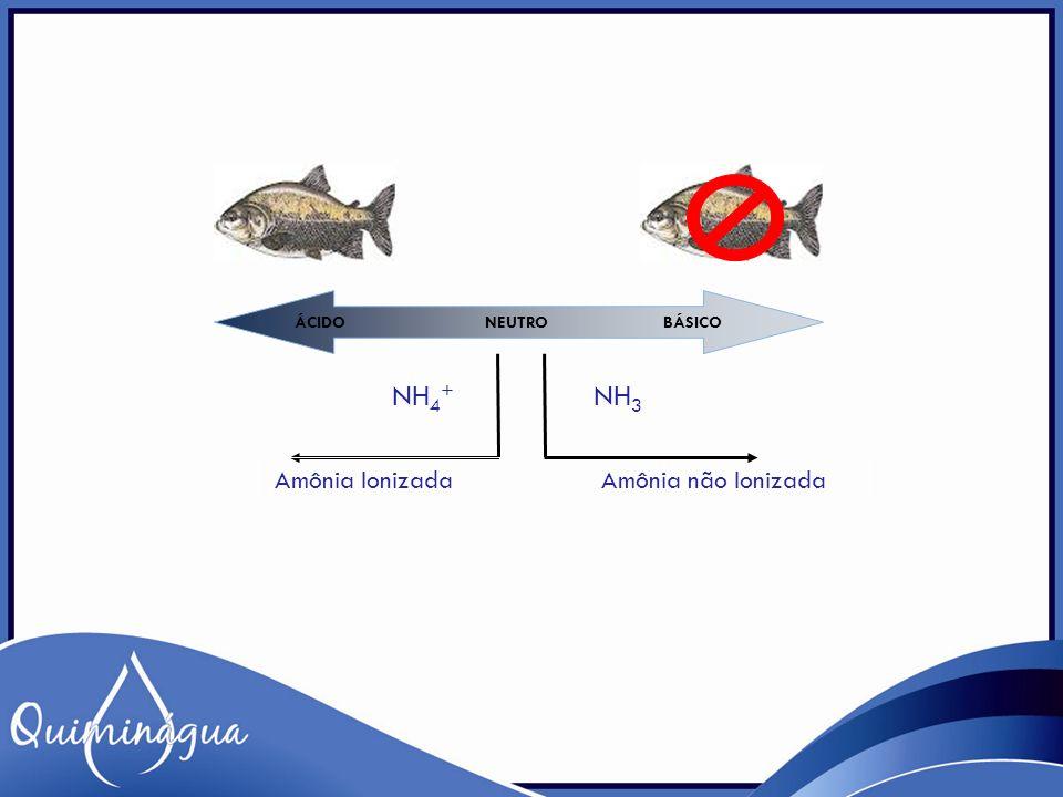 ÁCIDO NEUTRO BÁSICO Amônia Ionizada Amônia não Ionizada NH 3 NH 4 +