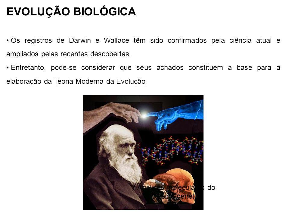 EVOLUÇÃO BIOLÓGICA Os registros de Darwin e Wallace têm sido confirmados pela ciência atual e ampliados pelas recentes descobertas. Entretanto, pode-s