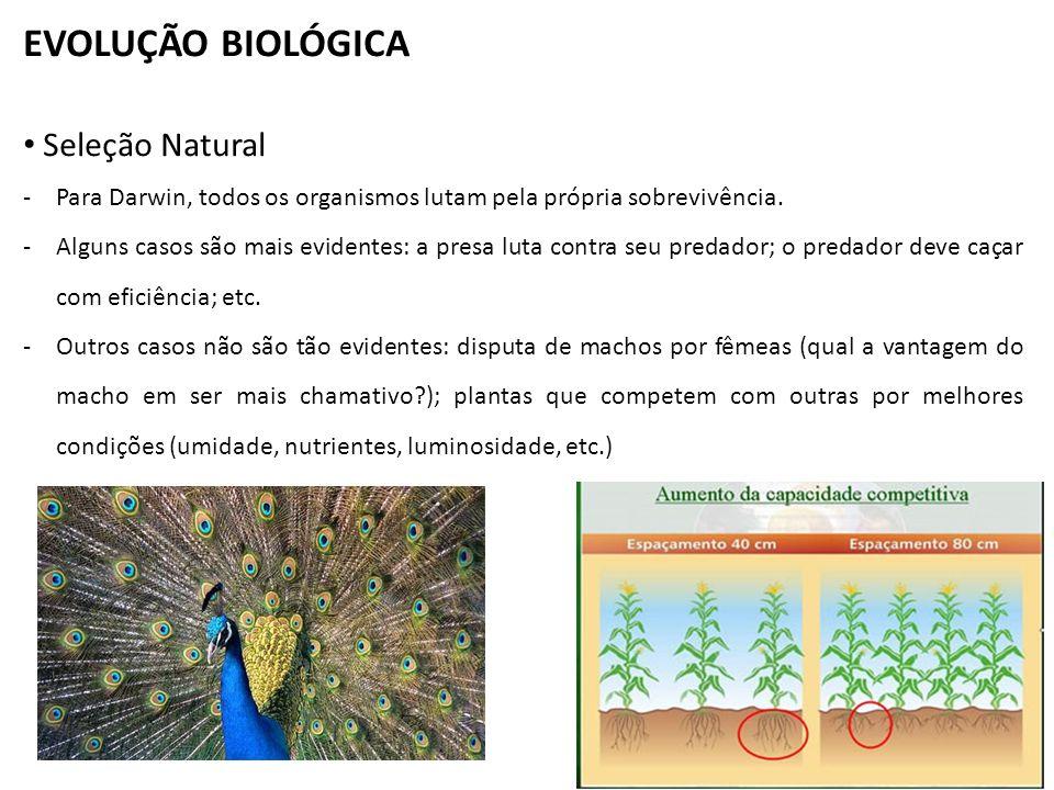 EVOLUÇÃO BIOLÓGICA Seleção Natural -Para Darwin, todos os organismos lutam pela própria sobrevivência. -Alguns casos são mais evidentes: a presa luta