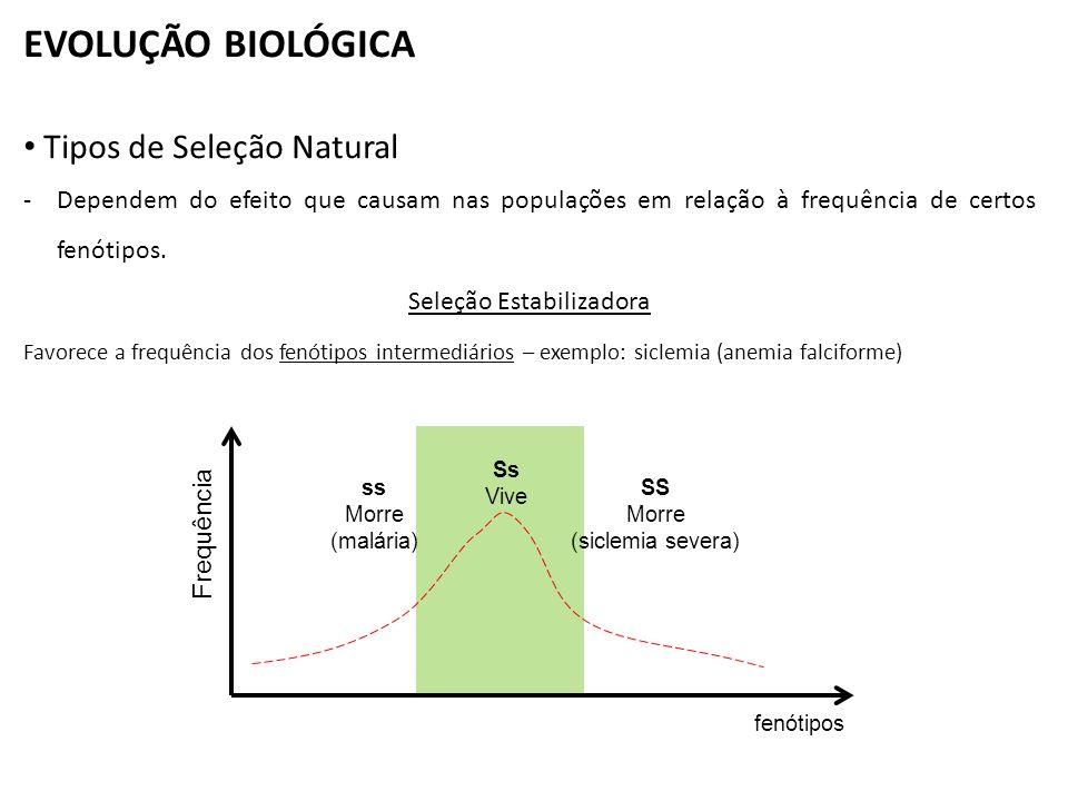 EVOLUÇÃO BIOLÓGICA Tipos de Seleção Natural -Dependem do efeito que causam nas populações em relação à frequência de certos fenótipos. Seleção Estabil