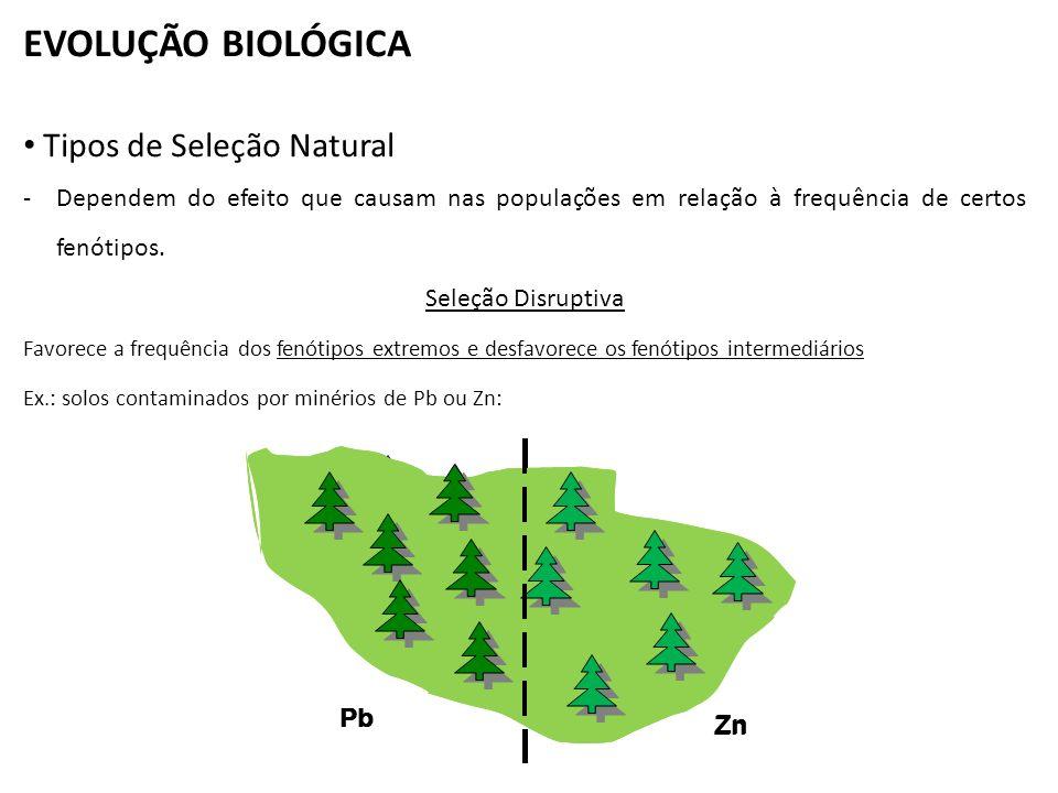 EVOLUÇÃO BIOLÓGICA Tipos de Seleção Natural -Dependem do efeito que causam nas populações em relação à frequência de certos fenótipos. Seleção Disrupt