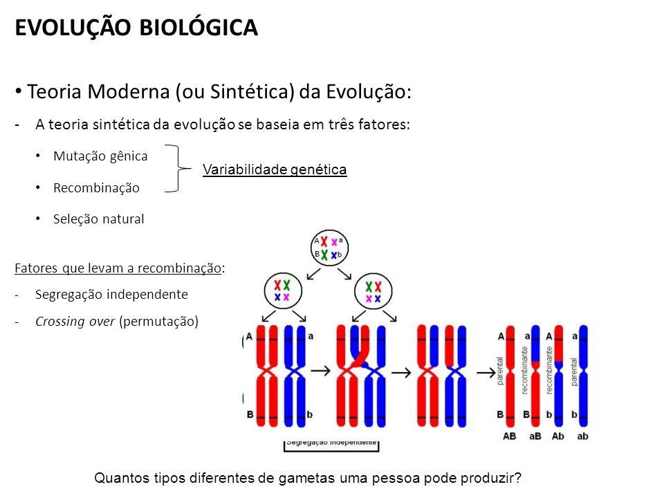 46 cromossomos paternos (2n) XY 46 cromossomos maternos (2n) XX Espermatozóide (n) (23 cromossomos) Óvulo (n) (23 cromossomos) 46 cromossomos (23 de origem paterna e 23 de origem materna) XX EVOLUÇÃO BIOLÓGICA Quantos tipos de gametas diferentes uma pessoa pode produzir.