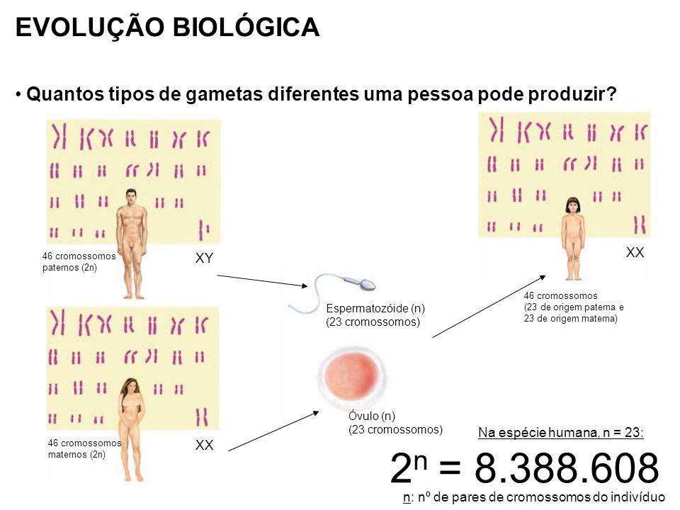 EVOLUÇÃO BIOLÓGICA Teoria Moderna (ou Sintética) da Evolução: -A teoria sintética da evolução se baseia em três fatores: Mutação gênica Recombinação Seleção natural Variabilidade genética Sobre as novas combinações gênicas, atua a seleção natural.