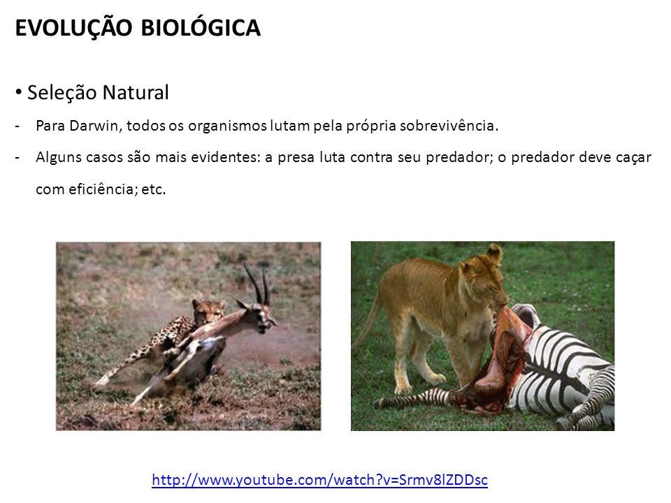 EVOLUÇÃO BIOLÓGICA Seleção Natural -Para Darwin, todos os organismos lutam pela própria sobrevivência.
