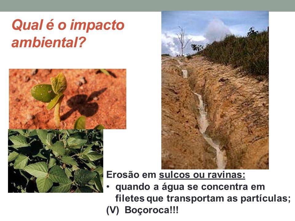 Qual é o impacto ambiental? Erosão em sulcos ou ravinas: quando a água se concentra em filetes que transportam as partículas; (V) Boçoroca!!!