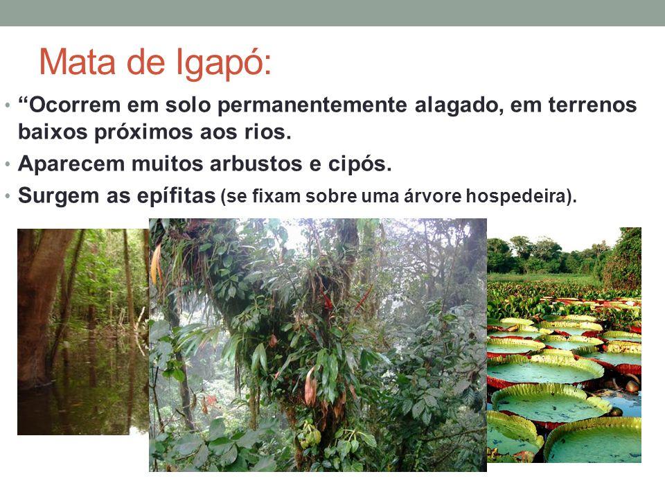 Ocorrem em solo permanentemente alagado, em terrenos baixos próximos aos rios. Aparecem muitos arbustos e cipós. Surgem as epífitas (se fixam sobre um