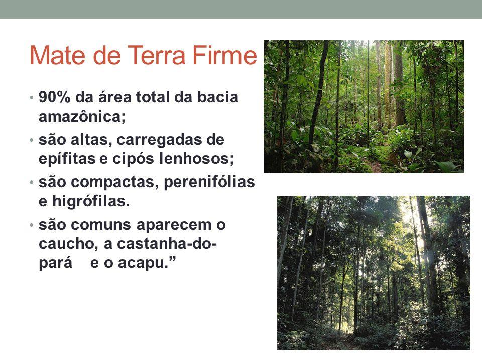 Mate de Terra Firme 90% da área total da bacia amazônica; são altas, carregadas de epífitas e cipós lenhosos; são compactas, perenifólias e higrófilas