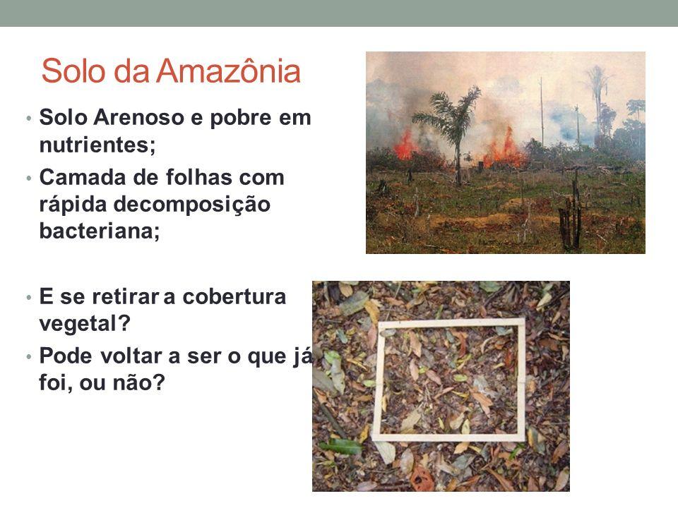 Solo da Amazônia Solo Arenoso e pobre em nutrientes; Camada de folhas com rápida decomposição bacteriana; E se retirar a cobertura vegetal? Pode volta