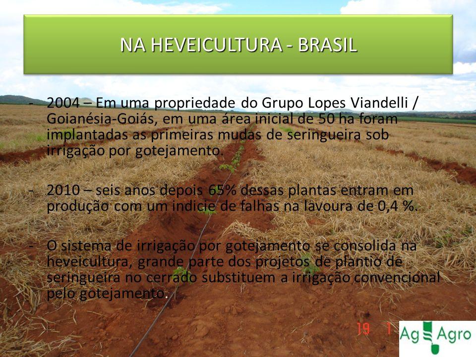 NA HEVEICULTURA - BRASIL -2004 – Em uma propriedade do Grupo Lopes Viandelli / Goianésia-Goiás, em uma área inicial de 50 ha foram implantadas as prim