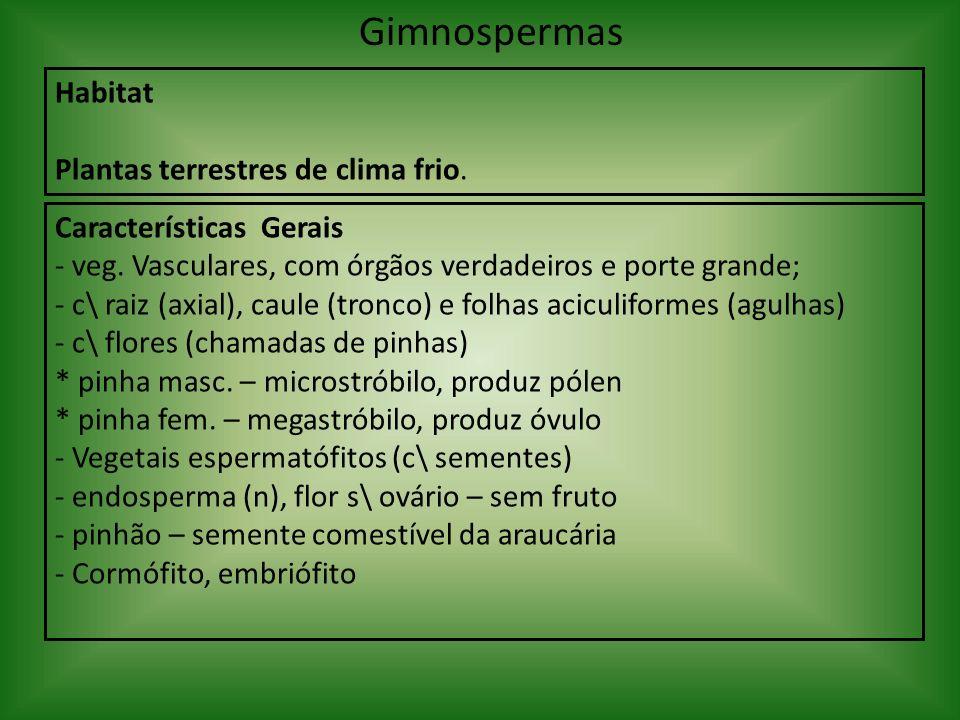 Gimnospermas Habitat Plantas terrestres de clima frio. Características Gerais - veg. Vasculares, com órgãos verdadeiros e porte grande; - c\ raiz (axi