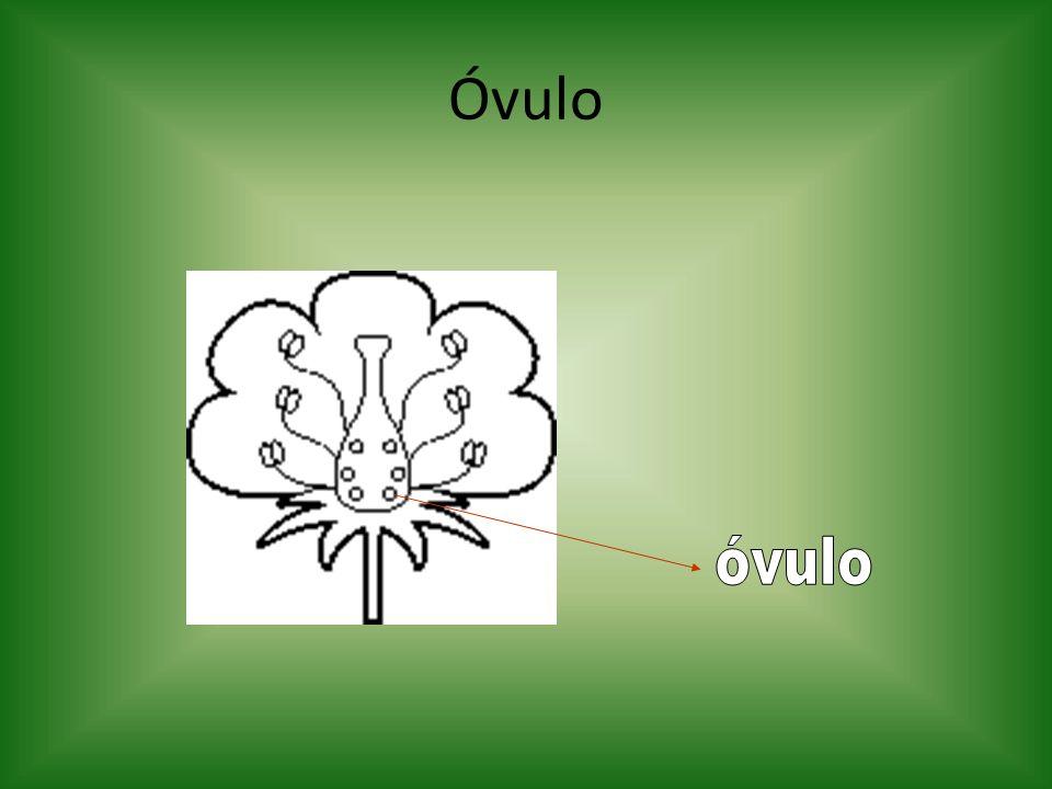 Óvulo