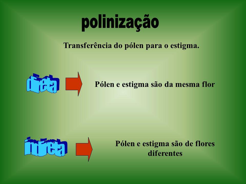 Transferência do pólen para o estigma. Pólen e estigma são da mesma flor Pólen e estigma são de flores diferentes