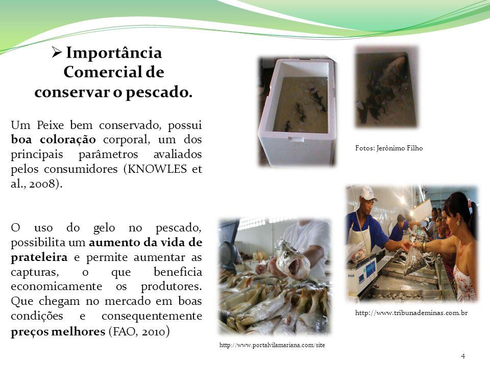 Importância Comercial de conservar o pescado. Um Peixe bem conservado, possui boa coloração corporal, um dos principais parâmetros avaliados pelos con