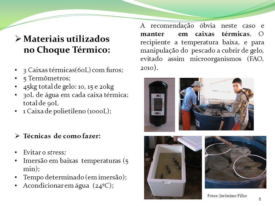 Materiais utilizados no Choque Térmico: 3 Caixas térmicas(60L) com furos; 5 Termômetros; 45kg total de gelo: 10, 15 e 20kg 30L de água em cada caixa t