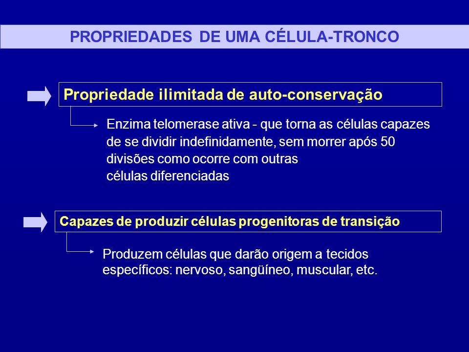 PREPARAÇÃO DE CÉLULAS TRONCO VIA EMBRIÕES HUMANOS 1) Produção/utilização de embriões humanos excedentes da fertilização in vitro 2) Desenvolvimento dos embriões até a fase de blastocisto 3) Separação do MCI do restante do embrião (morte) 4) Cultura das células do embrioblastos 5) Formação de sub-culturas onde são colocadas substâncias específicas que induzem a formação de linhagens celulares 6) Manutenção indefinida das CTs e linhagens tronco