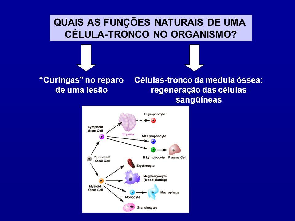 SCU Rico em CT Pode ser usado na reconstituição hematopoética São menos imunorreativas Material de fácil obtenção SANGUE DO CORDÃO UMBILICAL