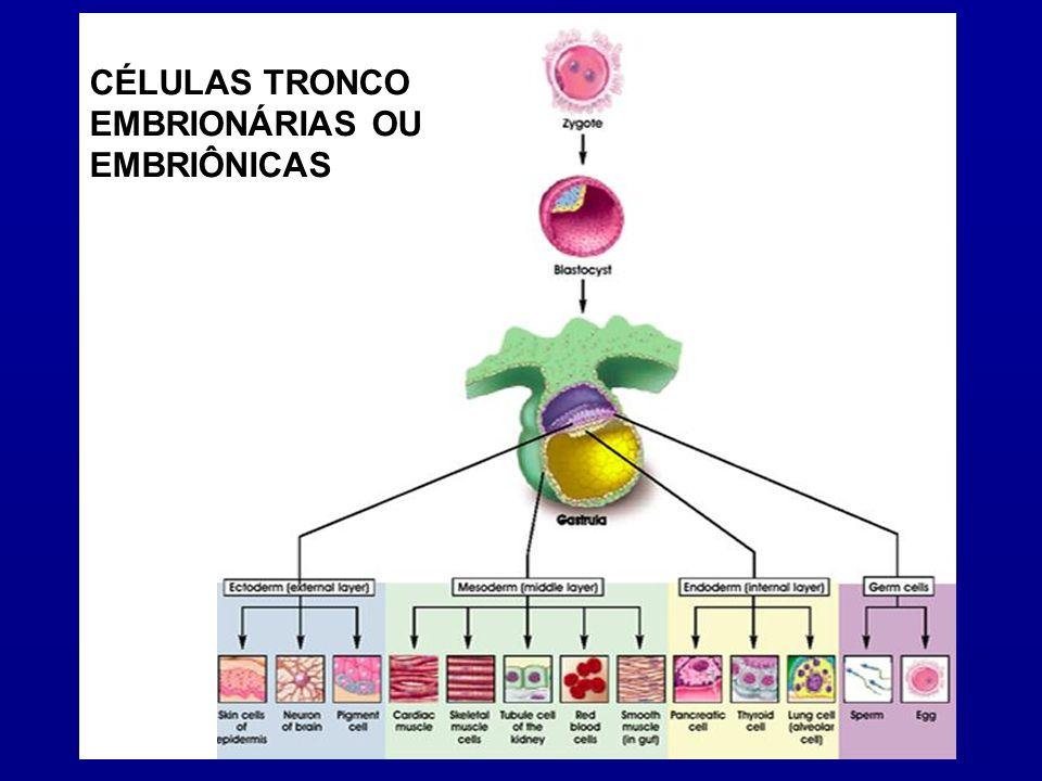Após a ambientação e a geração de novos tecidos as CT injetadas no organismo humano ainda estão sujeitas a ataques do sistema imunológico (como se fosse um órgão)