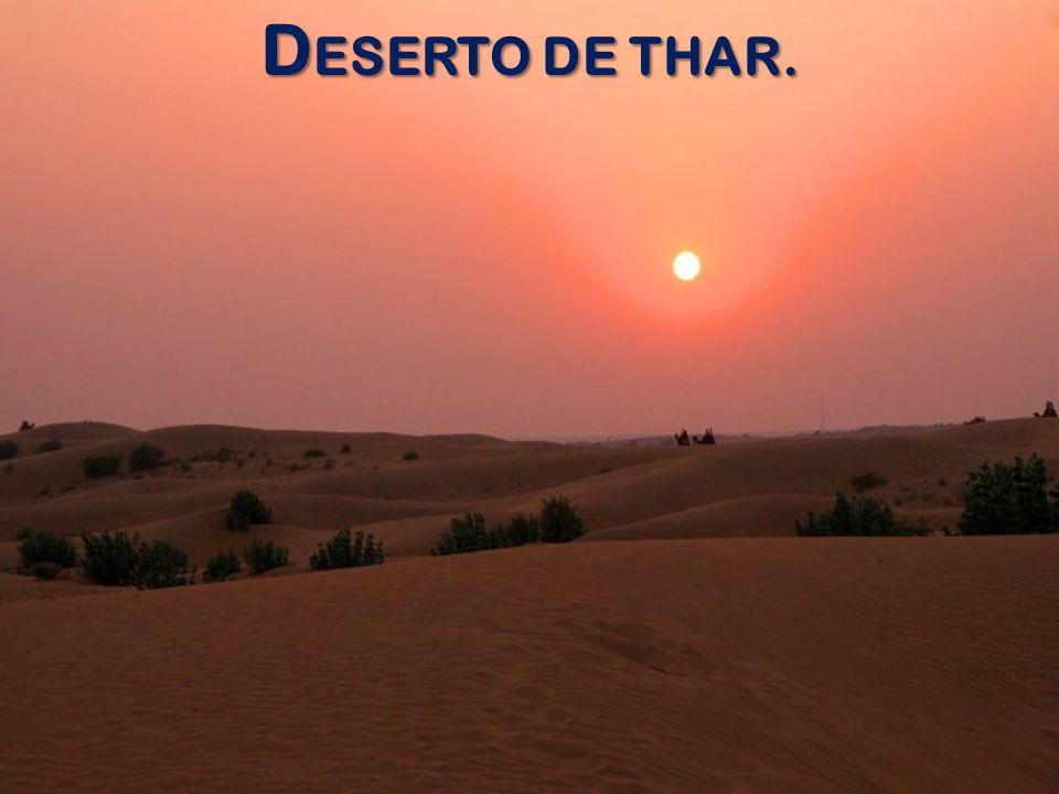 D ESERTO DE THAR.