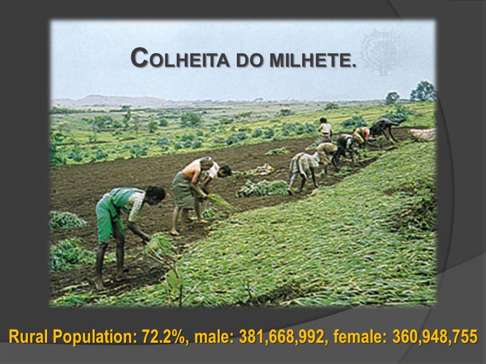 Rural Population: 72.2%, male: 381,668,992, female: 360,948,755 C OLHEITA DO MILHETE.