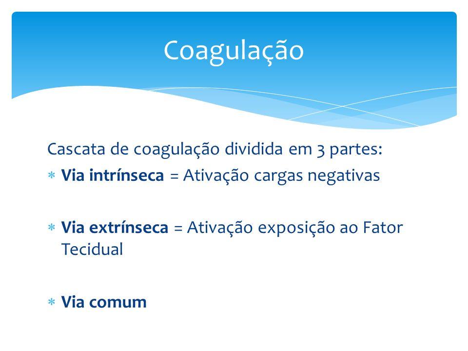 Cascata de coagulação dividida em 3 partes: Via intrínseca = Ativação cargas negativas Via extrínseca = Ativação exposição ao Fator Tecidual Via comum